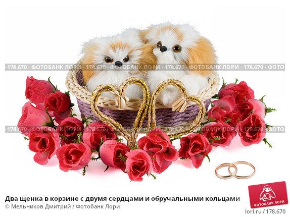 Два щенка в корзине с двумя сердцами и обручальными кольцами, фото № 178670, снято 17 января 2008 г. (c) Мельников Дмитрий / Фотобанк Лори