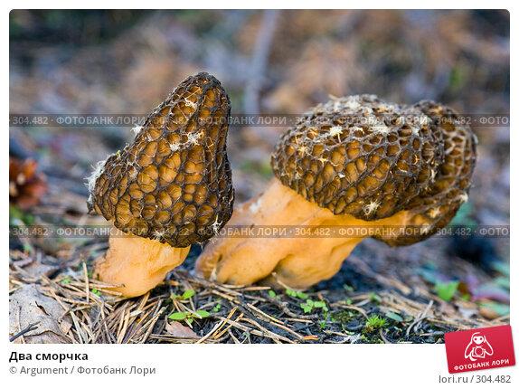 Два сморчка, фото № 304482, снято 12 июня 2007 г. (c) Argument / Фотобанк Лори