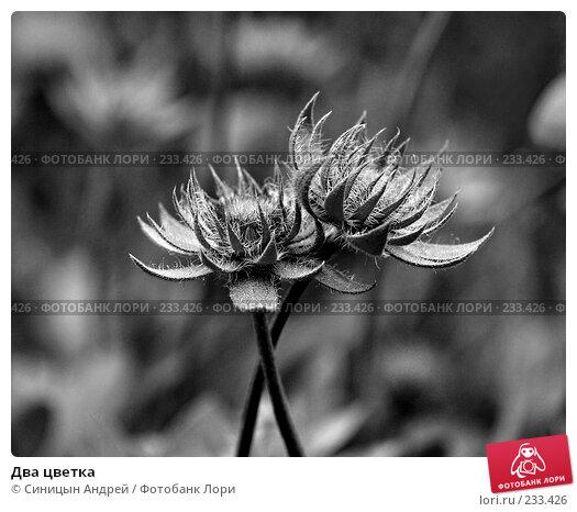 Два цветка, фото № 233426, снято 26 августа 2007 г. (c) Синицын Андрей / Фотобанк Лори