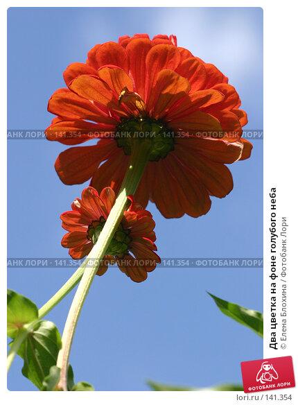 Два цветка на фоне голубого неба, фото № 141354, снято 26 августа 2007 г. (c) Елена Блохина / Фотобанк Лори