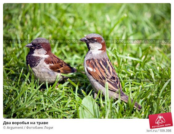 Купить «Два воробья на траве», фото № 109398, снято 14 июня 2007 г. (c) Argument / Фотобанк Лори