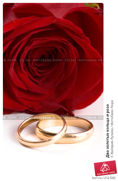 Два золотых кольца и роза, фото № 212542, снято 1 марта 2008 г. (c) Валерия Потапова / Фотобанк Лори