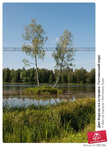 Две березы на островке. Гатчинский парк (2012 год). Редакционное фото, фотограф Виктор Карасев / Фотобанк Лори