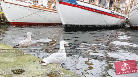 Купить «Две чайки стоят на причале возле белых парусных лодок», видеоролик № 3784082, снято 20 июля 2012 г. (c) Losevsky Pavel / Фотобанк Лори