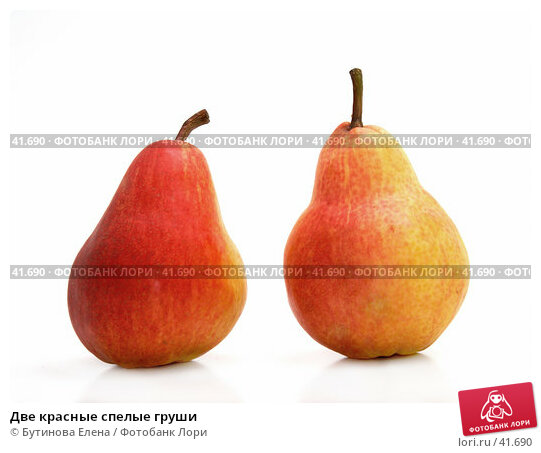 Две красные спелые груши, фото № 41690, снято 20 марта 2007 г. (c) Бутинова Елена / Фотобанк Лори