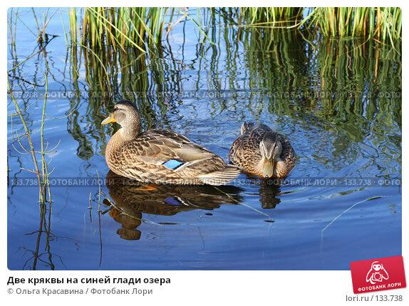 Две кряквы на синей глади озера, фото № 133738, снято 31 июля 2006 г. (c) Ольга Красавина / Фотобанк Лори