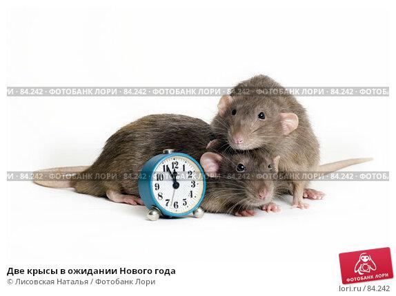 Две крысы в ожидании Нового года, фото № 84242, снято 15 сентября 2007 г. (c) Лисовская Наталья / Фотобанк Лори