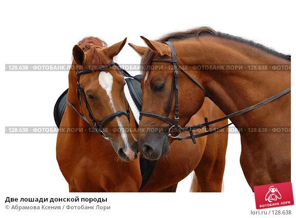 Две лошади донской породы, фото № 128638, снято 26 мая 2006 г. (c) Абрамова Ксения / Фотобанк Лори