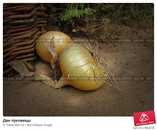 Купить «Две луковицы», фото № 84618, снято 15 сентября 2007 г. (c) Таня Нотта / Фотобанк Лори