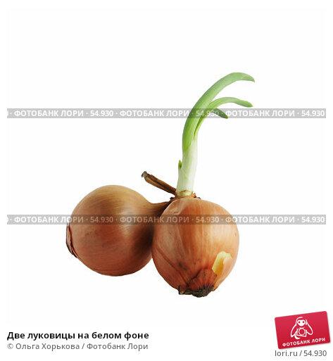 Купить «Две луковицы на белом фоне», фото № 54930, снято 10 апреля 2007 г. (c) Ольга Хорькова / Фотобанк Лори
