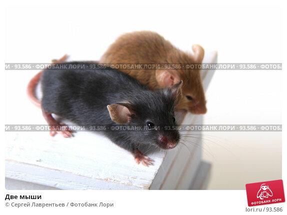 Две мыши, фото № 93586, снято 23 сентября 2007 г. (c) Сергей Лаврентьев / Фотобанк Лори