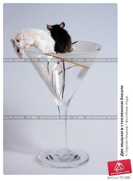 Две мышки в стеклянном бокале, фото № 57890, снято 18 марта 2007 г. (c) Сергей Лешков / Фотобанк Лори
