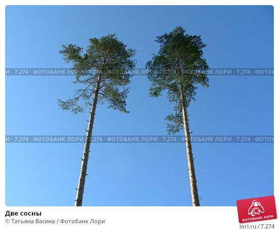 Две сосны, фото № 7274, снято 17 июня 2006 г. (c) Татьяна Васина / Фотобанк Лори
