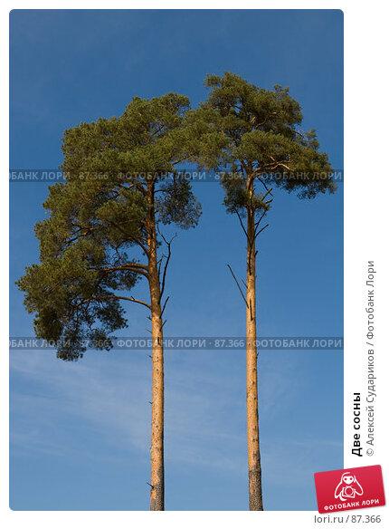 Две сосны, фото № 87366, снято 23 сентября 2007 г. (c) Алексей Судариков / Фотобанк Лори
