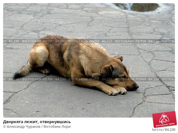 Купить «Дворняга лежит, отвернувшись», фото № 84230, снято 15 сентября 2007 г. (c) Александр Чураков / Фотобанк Лори