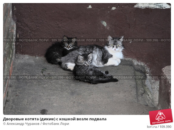 Дворовые котята (дикие) с кошкой возле подвала, фото № 109390, снято 24 февраля 2005 г. (c) Александр Чураков / Фотобанк Лори