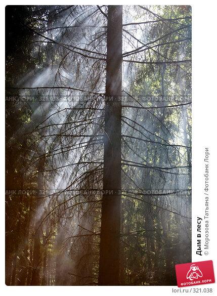 Дым в лесу, фото № 321038, снято 8 июня 2008 г. (c) Морозова Татьяна / Фотобанк Лори