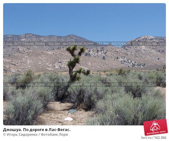 Джошуа. По дороге в Лас-Вегас., фото № 162366, снято 10 июня 2006 г. (c) Игорь Сидоренко / Фотобанк Лори
