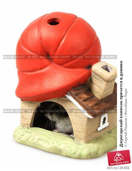 Джунгарский хомячок прячется в домике, фото № 29602, снято 18 марта 2007 г. (c) Сергей Лешков / Фотобанк Лори