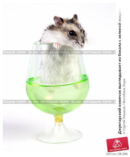 Джунгарский хомячок выглядывает из бокала с зеленой жидкостью, фото № 28394, снято 18 марта 2007 г. (c) Сергей Лешков / Фотобанк Лори