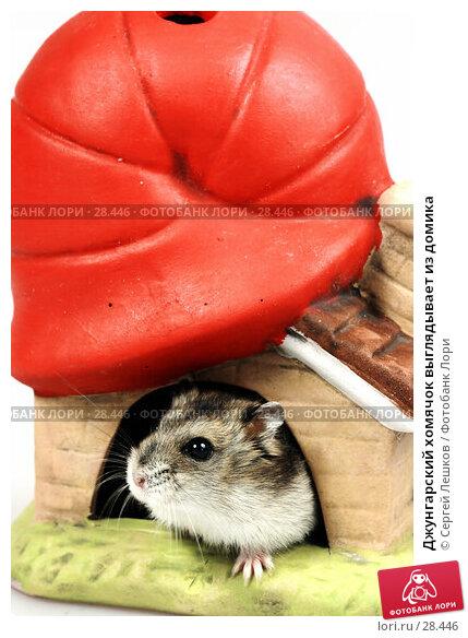 Джунгарский хомячок выглядывает из домика, фото № 28446, снято 18 марта 2007 г. (c) Сергей Лешков / Фотобанк Лори