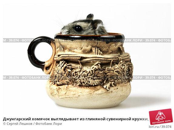 Джунгарский хомячок выглядывает из глиняной сувенирной кружки, боком, фото № 39074, снято 18 марта 2007 г. (c) Сергей Лешков / Фотобанк Лори