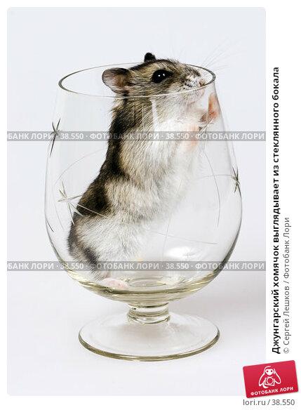 Джунгарский хомячок выглядывает из стеклянного бокала, фото № 38550, снято 18 марта 2007 г. (c) Сергей Лешков / Фотобанк Лори