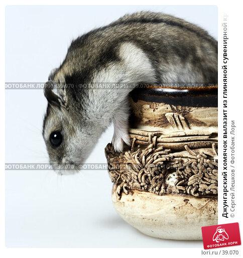 Джунгарский хомячок вылазит из глиняной сувенирной кружки, боком, фото № 39070, снято 18 марта 2007 г. (c) Сергей Лешков / Фотобанк Лори