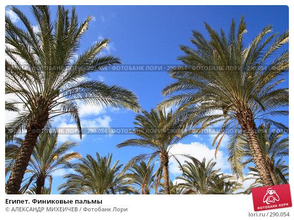 Египет. Финиковые пальмы, фото № 290054, снято 26 февраля 2008 г. (c) АЛЕКСАНДР МИХЕИЧЕВ / Фотобанк Лори