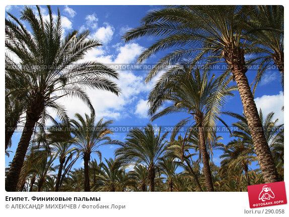 Египет. Финиковые пальмы, фото № 290058, снято 26 февраля 2008 г. (c) АЛЕКСАНДР МИХЕИЧЕВ / Фотобанк Лори