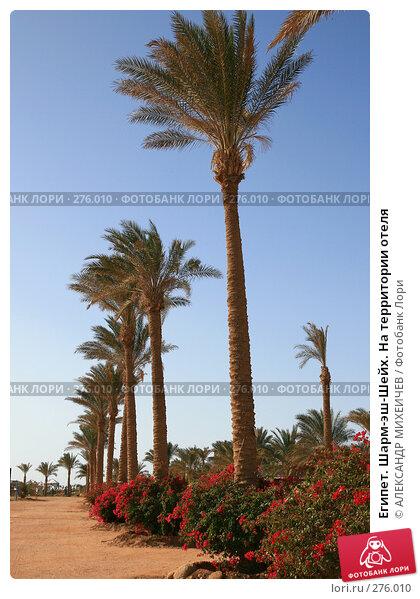 Египет. Шарм-эш-Шейх. На территории отеля, фото № 276010, снято 18 февраля 2008 г. (c) АЛЕКСАНДР МИХЕИЧЕВ / Фотобанк Лори
