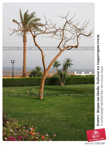 Египет. Шарм-эш-Шейх. Пейзаж на территории отеля, фото № 238046, снято 24 февраля 2008 г. (c) АЛЕКСАНДР МИХЕИЧЕВ / Фотобанк Лори