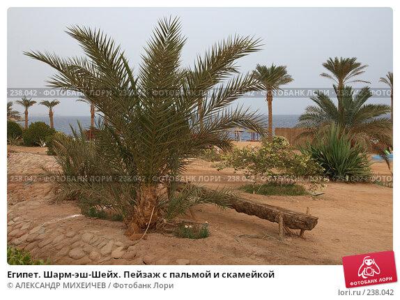 Египет. Шарм-эш-Шейх. Пейзаж с пальмой и скамейкой, фото № 238042, снято 24 февраля 2008 г. (c) АЛЕКСАНДР МИХЕИЧЕВ / Фотобанк Лори