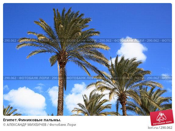 Египет.Финиковые пальмы., фото № 290062, снято 26 февраля 2008 г. (c) АЛЕКСАНДР МИХЕИЧЕВ / Фотобанк Лори