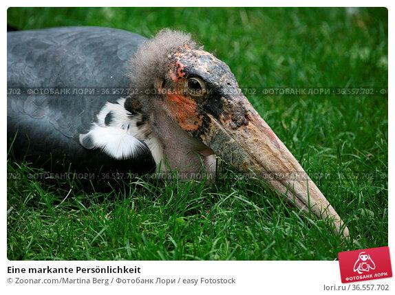 Eine markante Persönlichkeit. Стоковое фото, фотограф Zoonar.com/Martina Berg / easy Fotostock / Фотобанк Лори