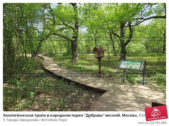 Картинки экологическая тропа весной