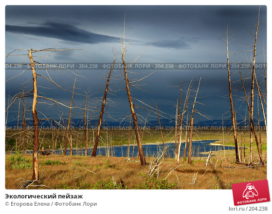 Экологический пейзаж, фото № 204238, снято 12 августа 2005 г. (c) Егорова Елена / Фотобанк Лори
