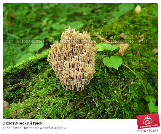 Экзотический гриб, фото № 10838, снято 11 сентября 2004 г. (c) Вячеслав Потапов / Фотобанк Лори