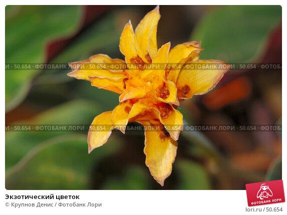 Купить «Экзотический цветок», фото № 50654, снято 7 мая 2007 г. (c) Крупнов Денис / Фотобанк Лори