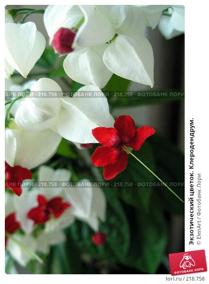 Экзотический цветок. Клеродендрум., фото № 218758, снято 27 мая 2017 г. (c) ElenArt / Фотобанк Лори