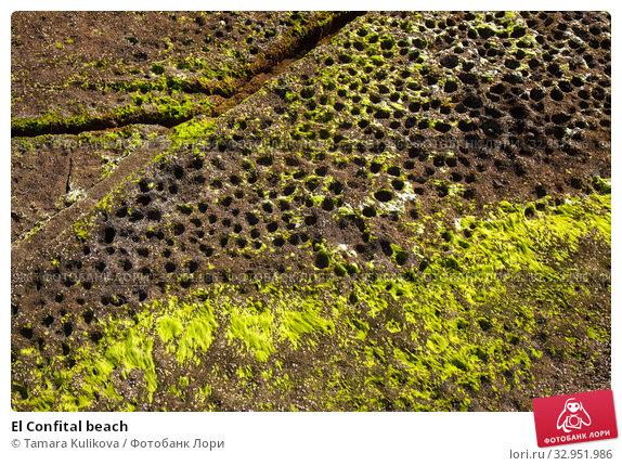 El Confital beach. Стоковое фото, фотограф Tamara Kulikova / Фотобанк Лори