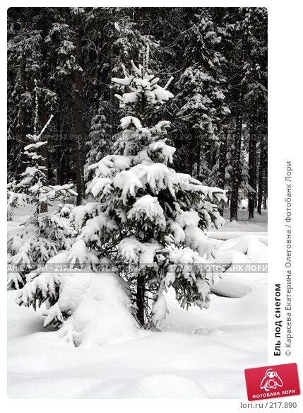 Ель под снегом, фото № 217890, снято 3 февраля 2008 г. (c) Карасева Екатерина Олеговна / Фотобанк Лори