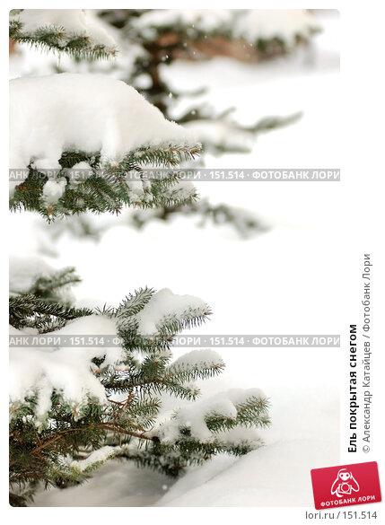 Ель покрытая снегом, фото № 151514, снято 2 декабря 2007 г. (c) Александр Катайцев / Фотобанк Лори