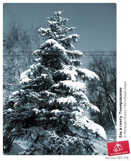 Ель в снегу. Тонирование, фото № 181178, снято 15 декабря 2007 г. (c) Петрова Ольга / Фотобанк Лори