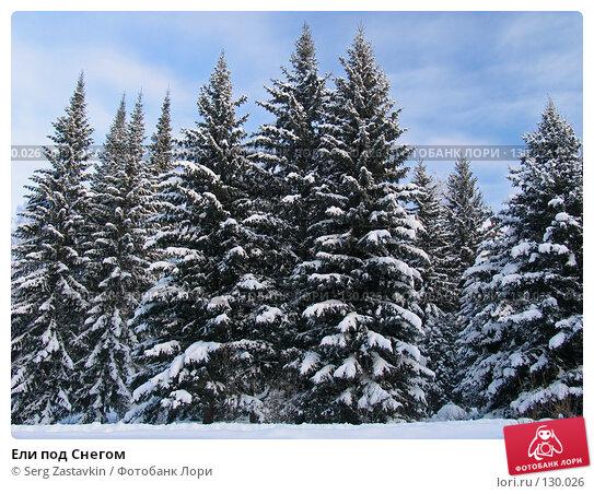 Ели под Снегом, фото № 130026, снято 17 декабря 2004 г. (c) Serg Zastavkin / Фотобанк Лори