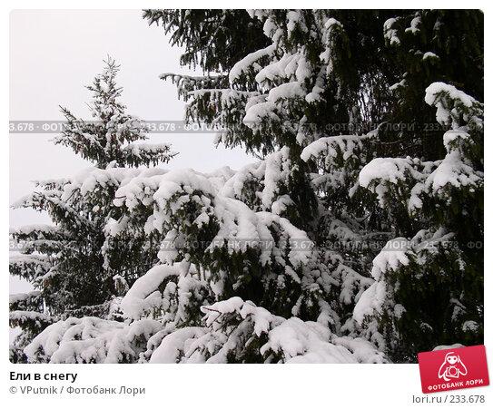 Ели в снегу, фото № 233678, снято 26 июля 2017 г. (c) VPutnik / Фотобанк Лори