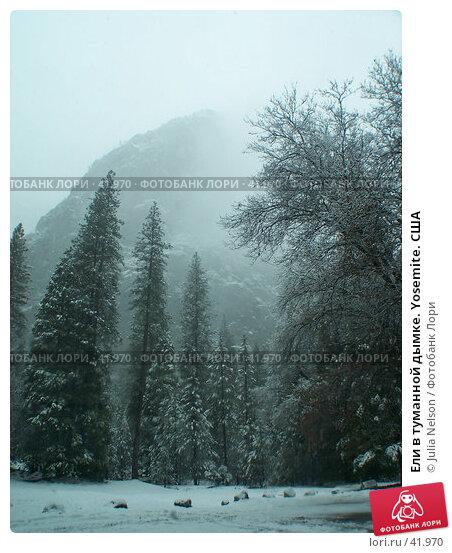 Купить «Ели в туманной дымке. Yosemite. США», фото № 41970, снято 26 февраля 2007 г. (c) Julia Nelson / Фотобанк Лори