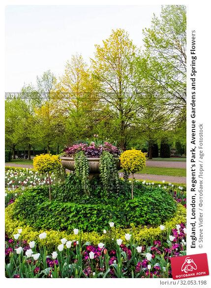England, London, Regent's Park, Avenue Gardens and Spring Flowers. Стоковое фото, фотограф Steve Vidler / age Fotostock / Фотобанк Лори