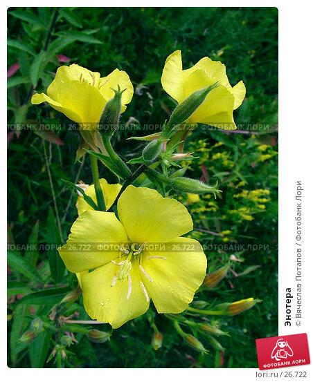 Купить «Энотера», фото № 26722, снято 13 июля 2004 г. (c) Вячеслав Потапов / Фотобанк Лори
