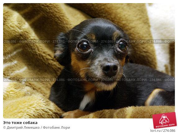 Купить «Это тоже собака», фото № 274086, снято 27 февраля 2008 г. (c) Дмитрий Лемешко / Фотобанк Лори